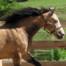 horses-at-play-1-1307229